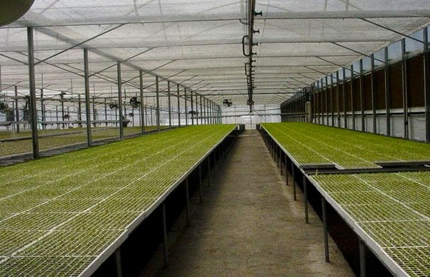 كتاب إنتاج شتلات الخضر للزراعات المحمية