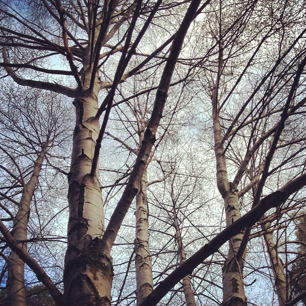 naked trees, branches, blue sky