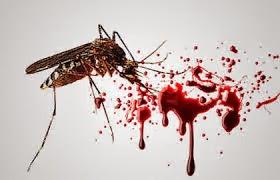 Pengobatan Tradisional Penyakit Demam Berdara Alami