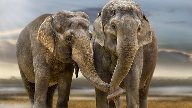 Será que existe homossexualidade entre outros animais?