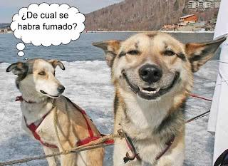 risas de un perro