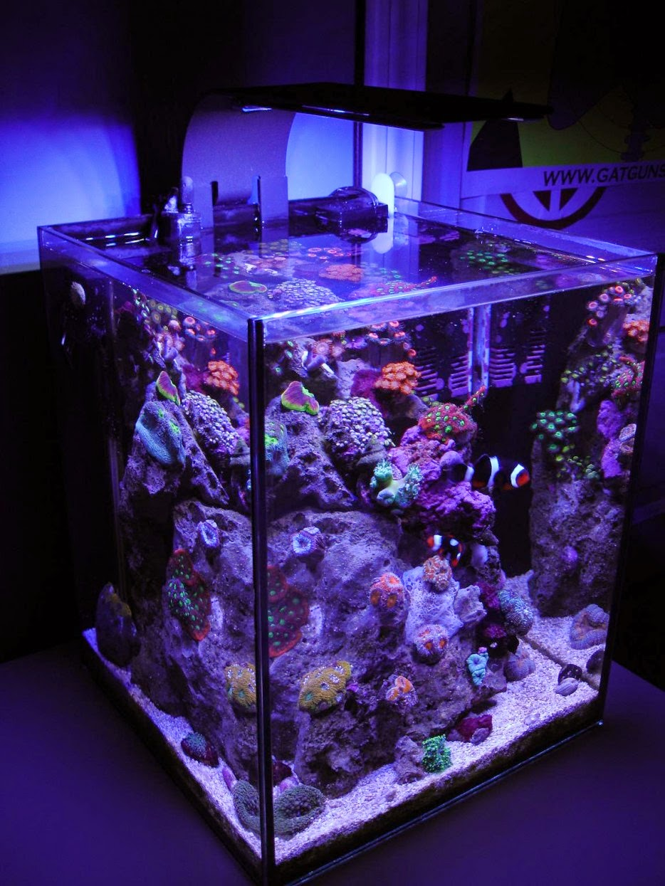 Unpodiblog 30 modi di mettere un acquario in casa p1 for Acquario in casa