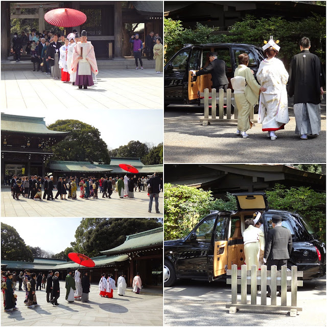Witnessing Japanese Traditional Shinto Wedding Ceremony at Meiji Shrine in Tokyo, Japan