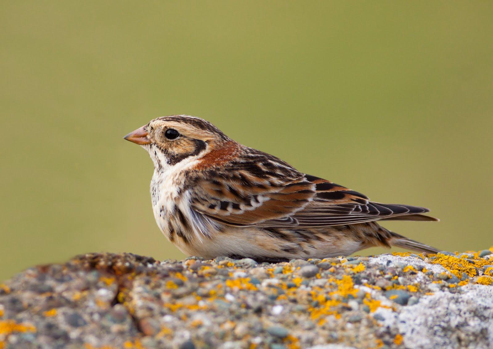 Birding Gallery