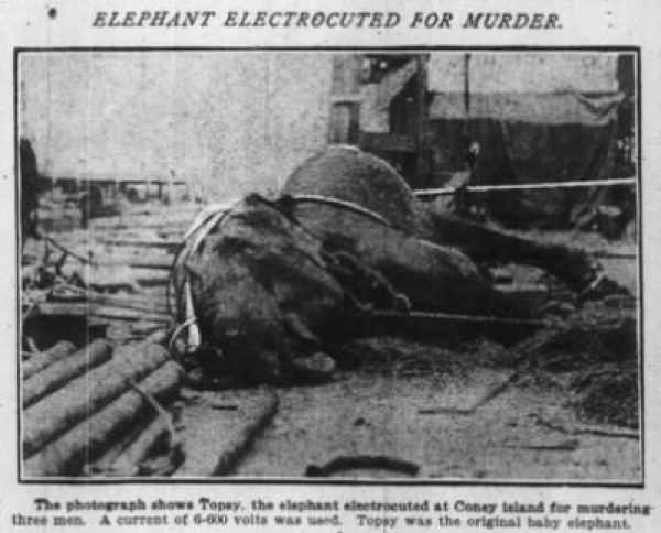 Elephant Electrocuted for Murder