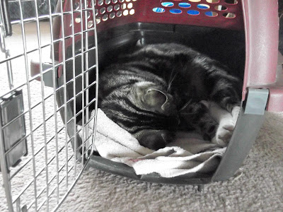 Winston naps in the cat cage