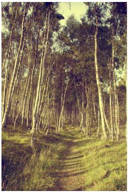 camino en el bosque, caminar en el bosque,