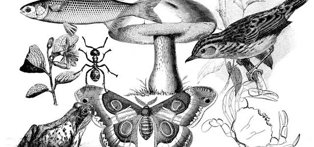 Taxonomia y biologia