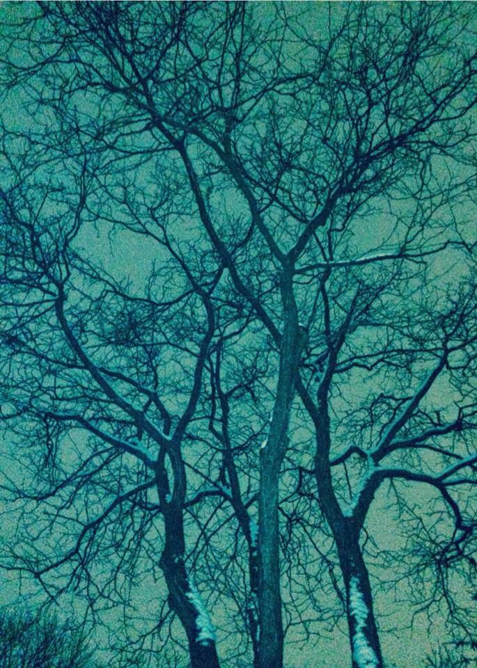 Cindy Krysmanski's Tree