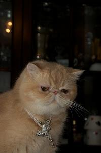 Il più piccolo felino è un capolavoro (Leonardo da Vinci)