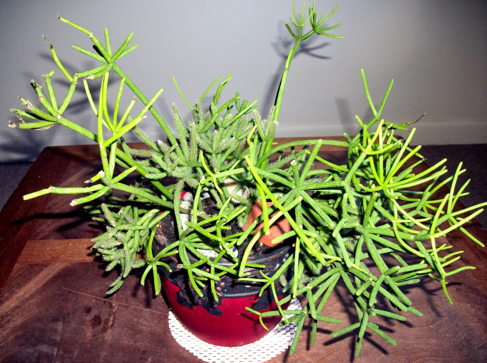 Indoor Plants For Positive Energy Amp Clean Air