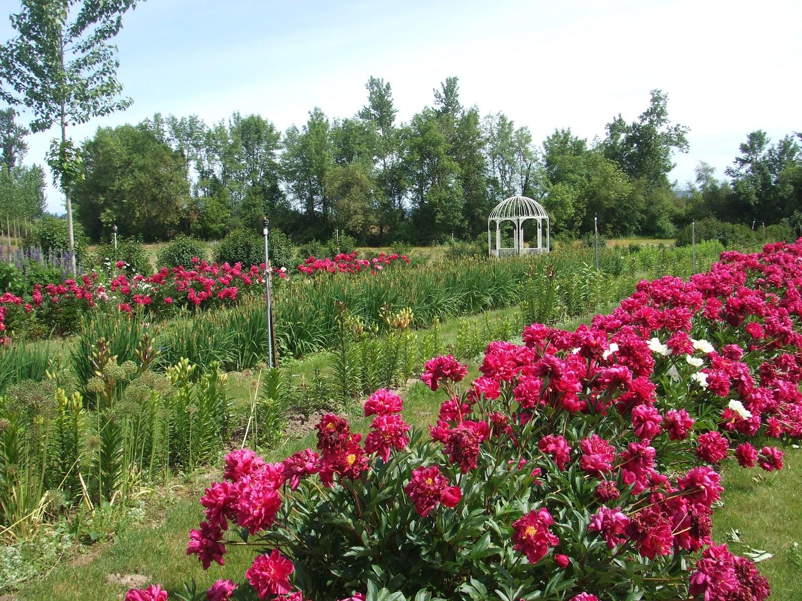 Flowers jam green villa barn gardens for Villa garden