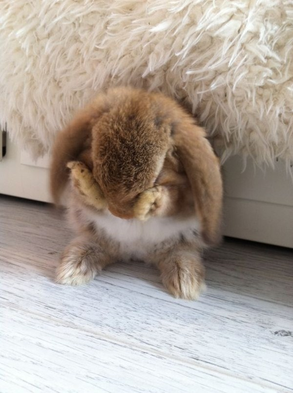cute bunny covers his face with his little hands, cute bunny photos, bunny pictures