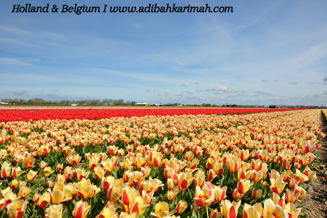 holiday to holland and belgium with premium beautiful at keukenhof with Allah creation