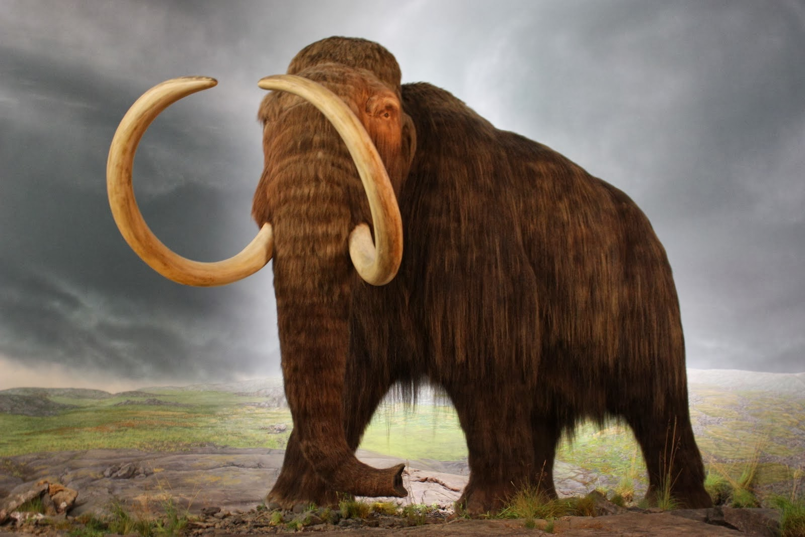 the history of the woolly mammoth Peter thiel gave $100,000 to the scientists trying to resurrect the woolly mammoth the woolly mammoth went a paleobiologist at the natural history.