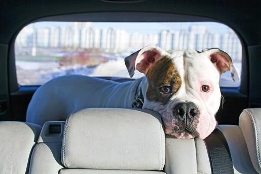 Zagraniczny wyjazd z psem