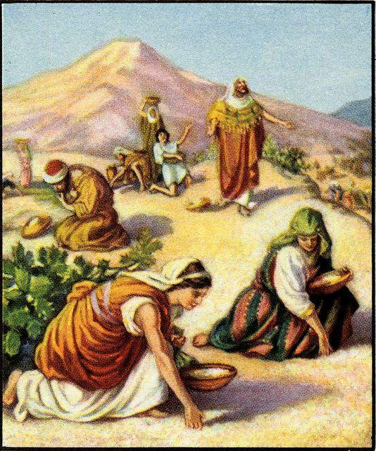 Manna-feast destiny dans immagini sacre manna