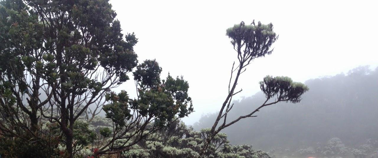 kabut tebal di mandalawangi