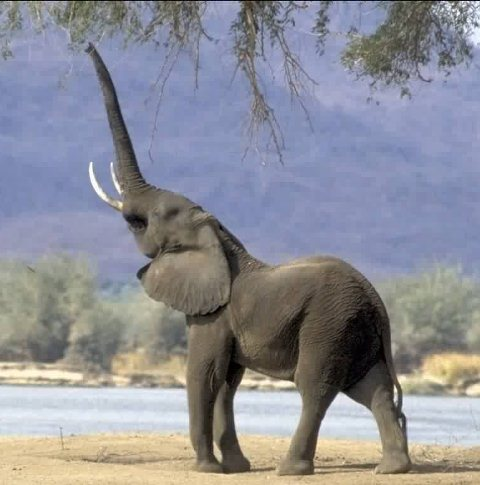 Elephant Pictures