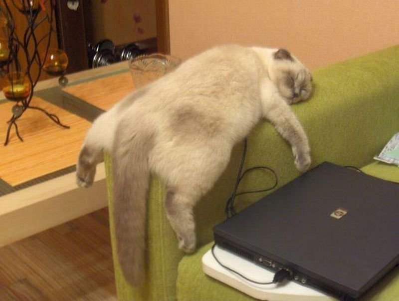 У кота закончился еще один тяжелый день