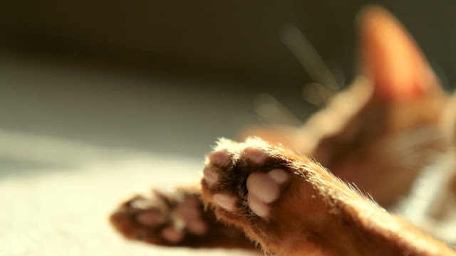 Cat Paws Photo