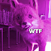 15 raposas ridiculamente empalhadas