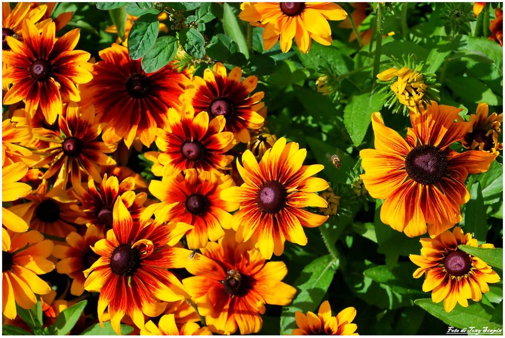 In questo blog c e un altra pagina dedicata ai fiori fiori del mondo 2