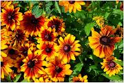 FIORI DEL MONDO (un bouquet di fiori di montagna )