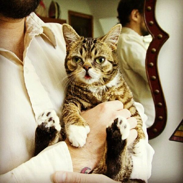 Lil Bub is a Nature's Happy Accident cat, cute lil bub, lil bub pictures