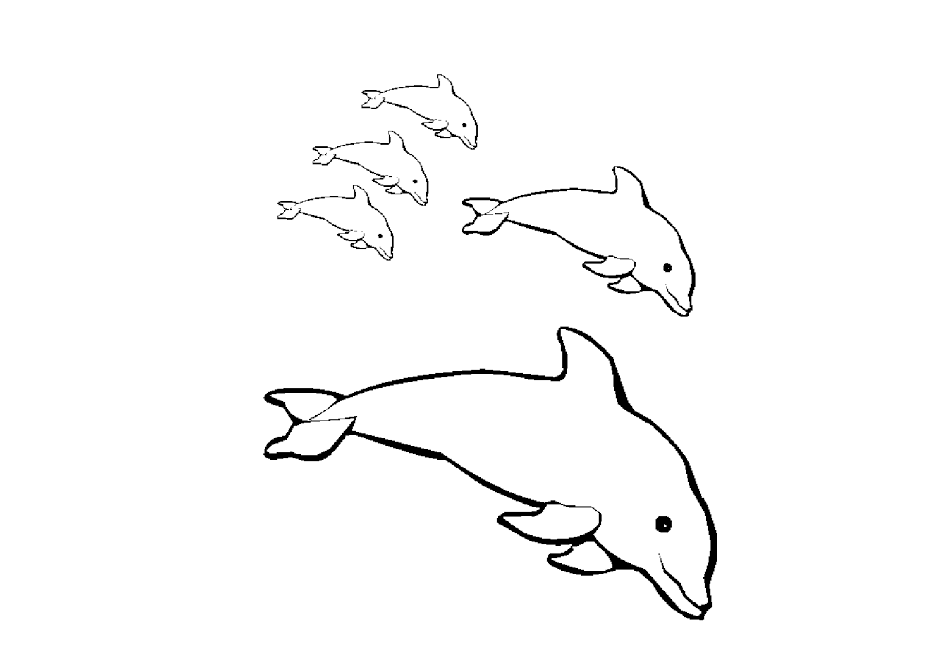 Dolphins Coloring Drawing Free wallpaper