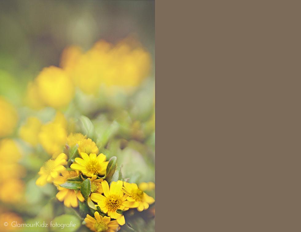 lensbaby macro fotografie workshop apeldoorn bloemen natuurlijk licht