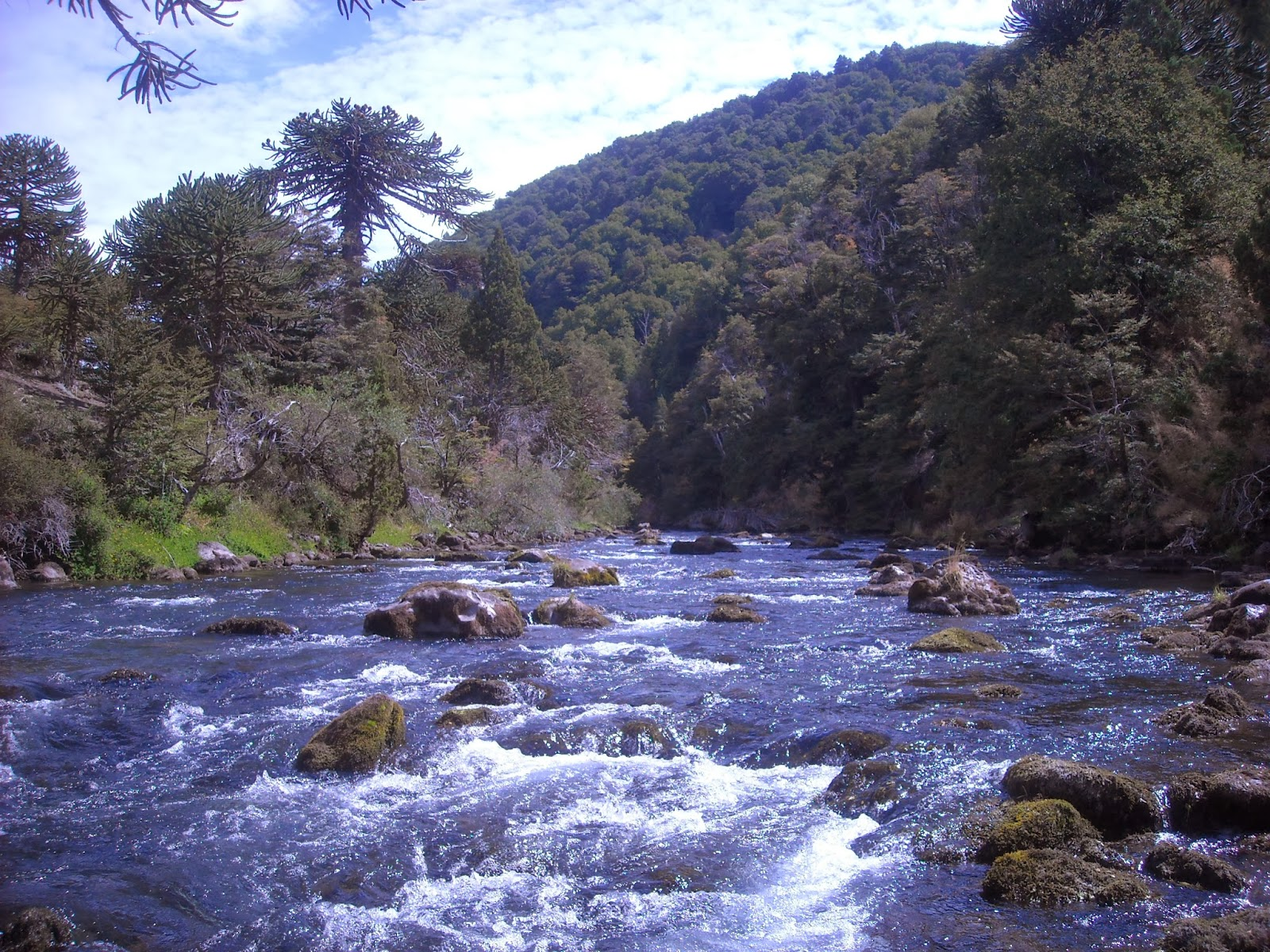 First cast fly fishing fly fishing patagonia argentina for Fly fishing patagonia