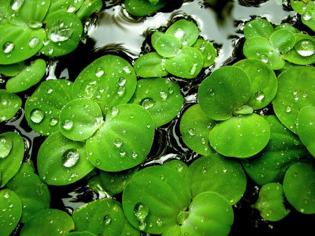 hojas verdes