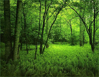 Green Jungle Nature Wallpaper