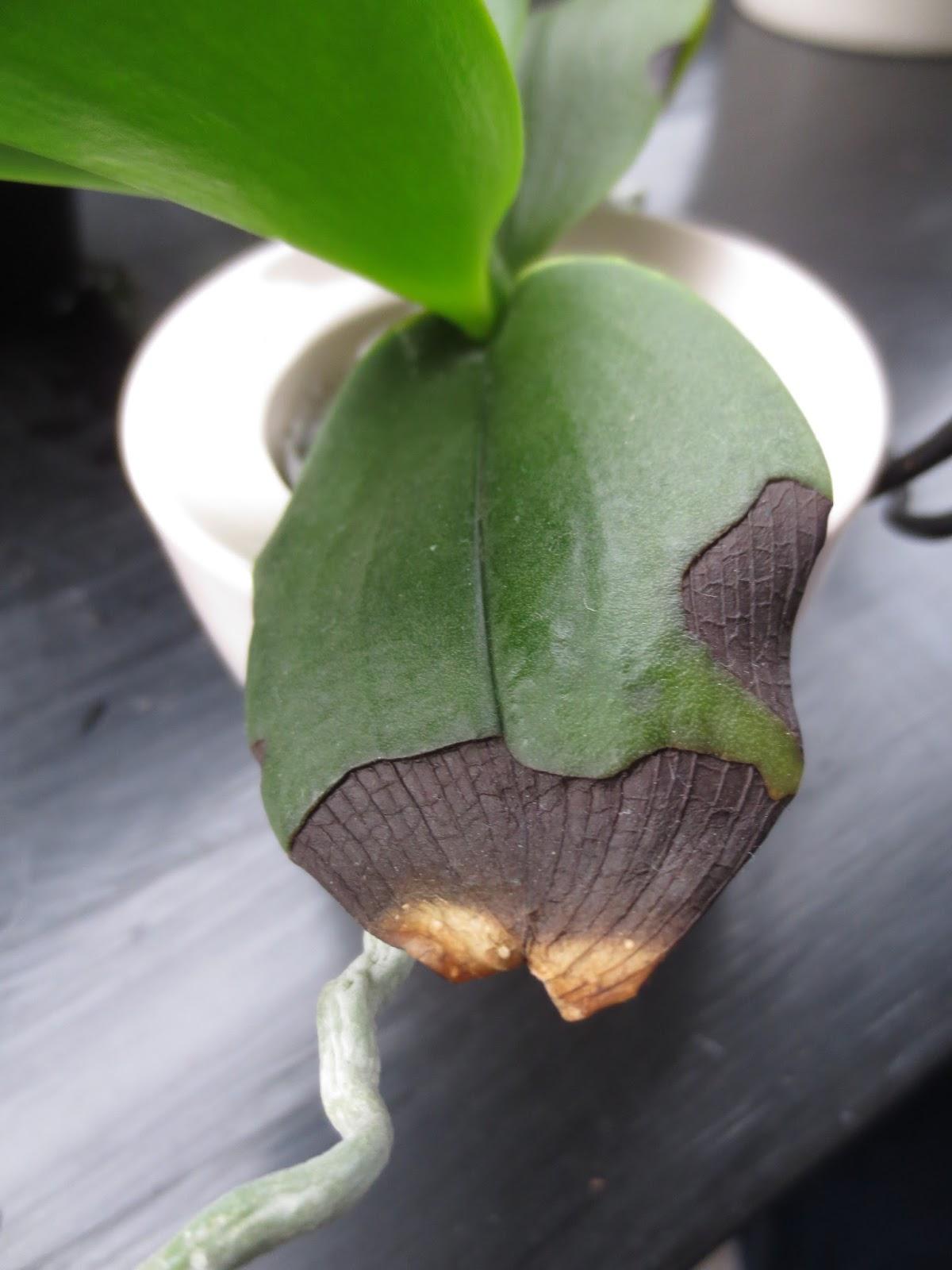 Orchid es au fil du temps coups de soleil - Coup de soleil combien de temps ...