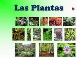 La naturaleza for Utilidad de las plantas ornamentales