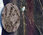 The Facemash Post - Ilmuwan Temukan Fosil Laba-Laba terbesar - Bisa Memangsa Burung Dan Kelelawar