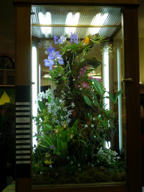 The Fern And Mossery How To Make An Orchid Terrarium