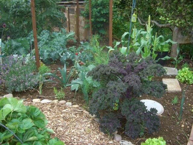 Landscaping With Edibles : Allotment wonderful rain
