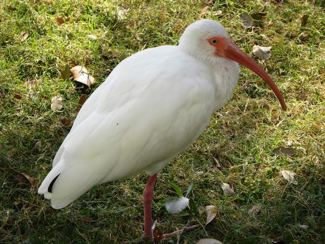 Birds in Bush Gardens