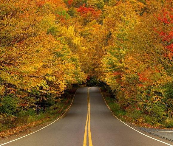 Outono Túnel da árvore - EUA