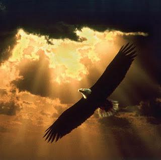 Renovação das Águias