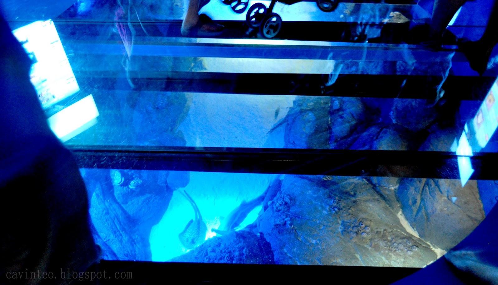 Entree kibbles s e a aquarium world 39 s largest aquarium for Floor fish tank