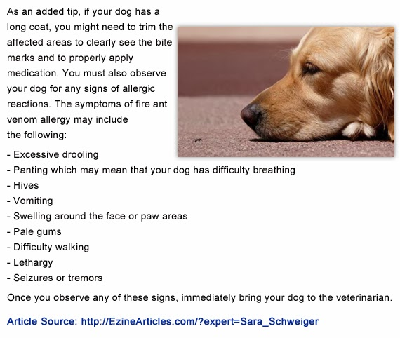 Fire Ant Bites on Dogs How to Treat Fire Ant Bites in