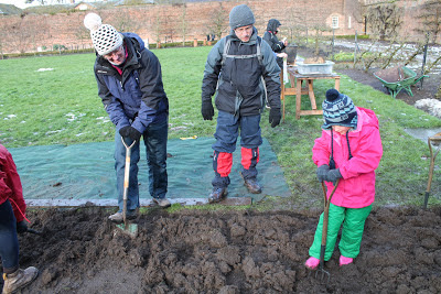The Wiggle family digging in Beningbrough Hall allotment