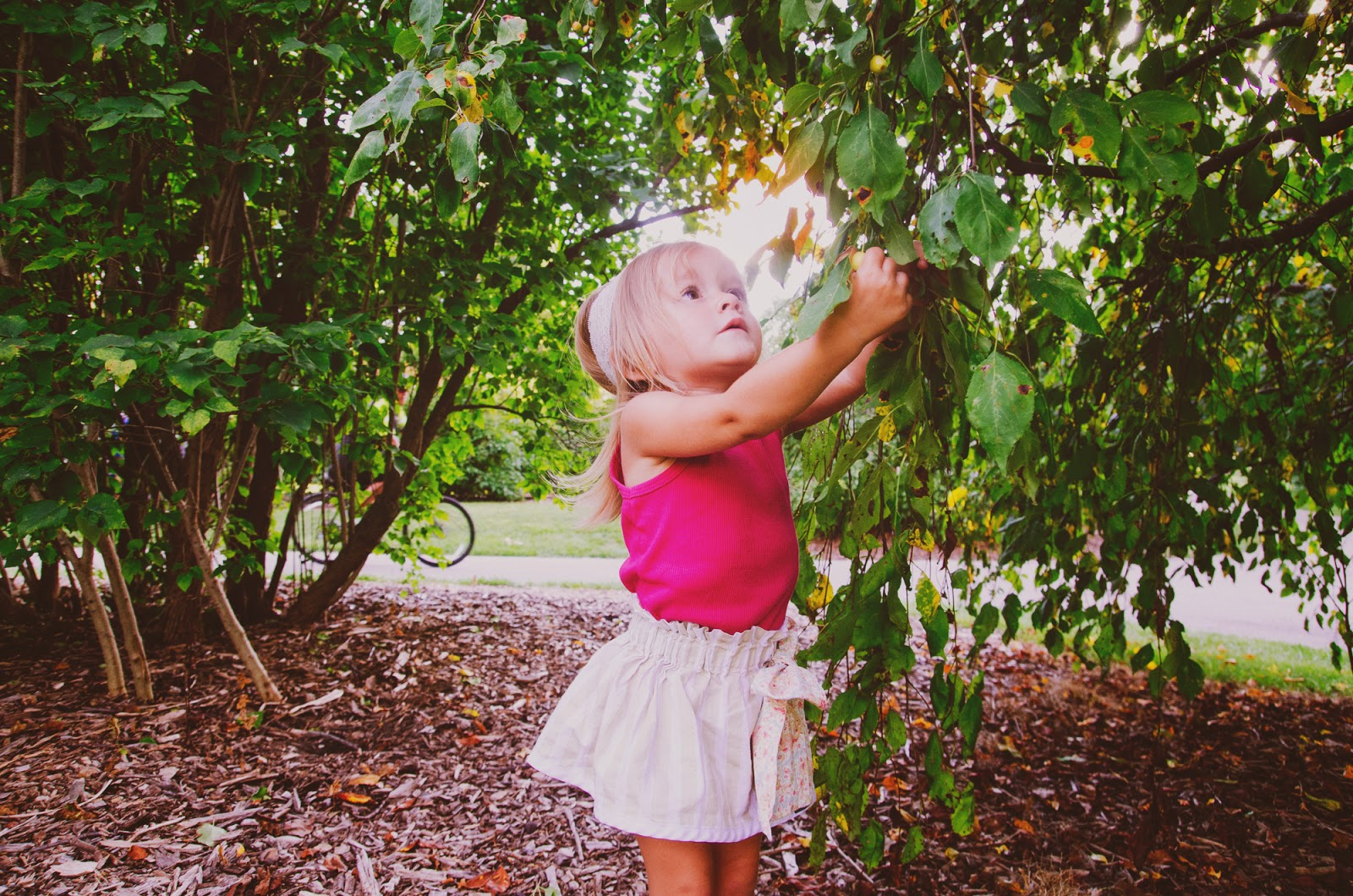 picking apples at boho family photo session in indianapolis