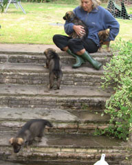 Puppies climbing up and down the steps