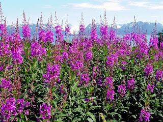 Procvalo cvijeće, proljeće slike besplatne pozadine za desktop download