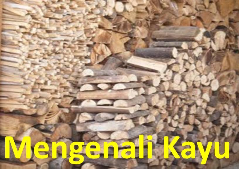 Gambar 2. jenis-jenis kayu