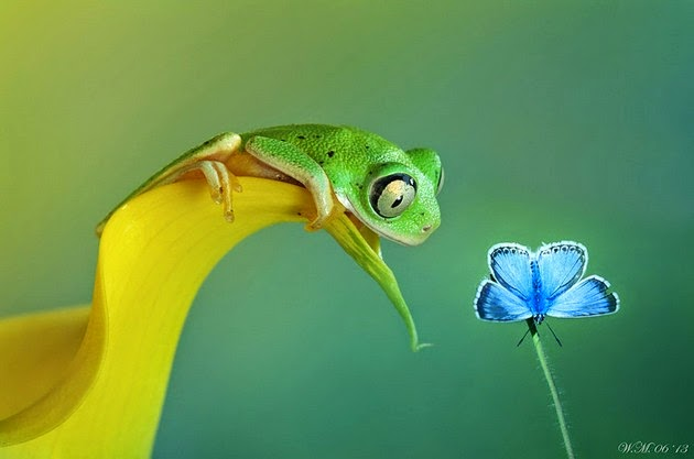 animal photography, frogs